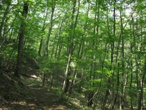 遊歩道-雑木林-